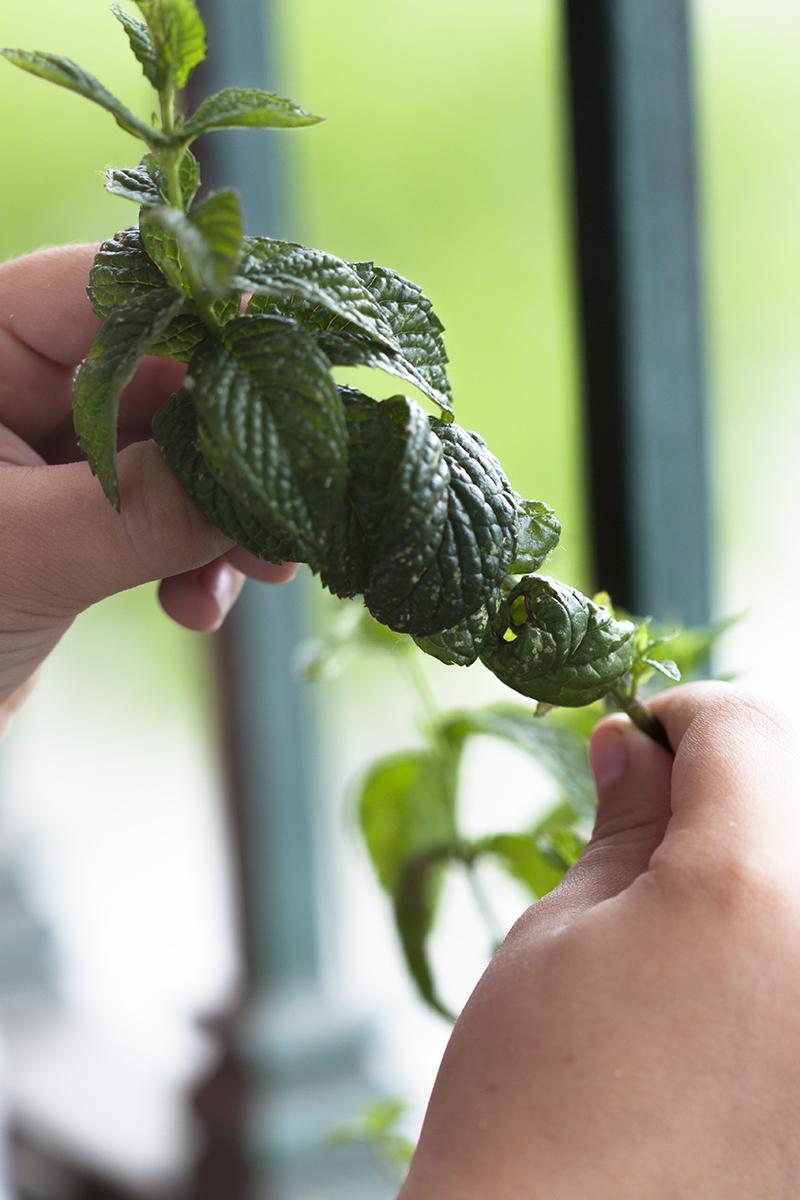 Tener pequeñas macetas en el balcón con hierbas aromáticas puede ser muy útil y podemos encargar al niño su cuidado.